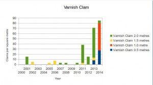 Varnish clams