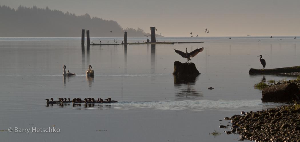 untitled-4461 | Cowichan Estuary Nature Centre